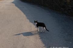 Portlligat Cat