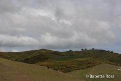 Between Raglan & Rotorua
