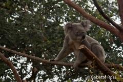 Australia Wildlife Park