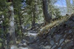 Lupine Meadow Trail