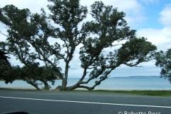 en route Waipoua
