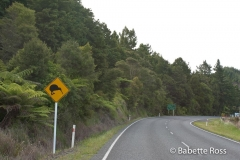 Kiwi Crossing Sign