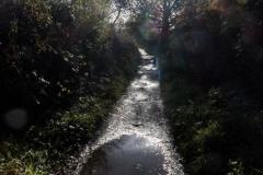 Bray to Greystones Cliff Walk 2018-11-07